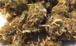 Cannabis light, a Verona ne fanno uso anche minorenni