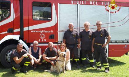 Cucciolo rischia di annegare nell'Adige, salvato dai vigili del fuoco