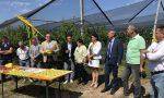 Coldiretti presenta un progetto sperimentale contro la cimice asiatica
