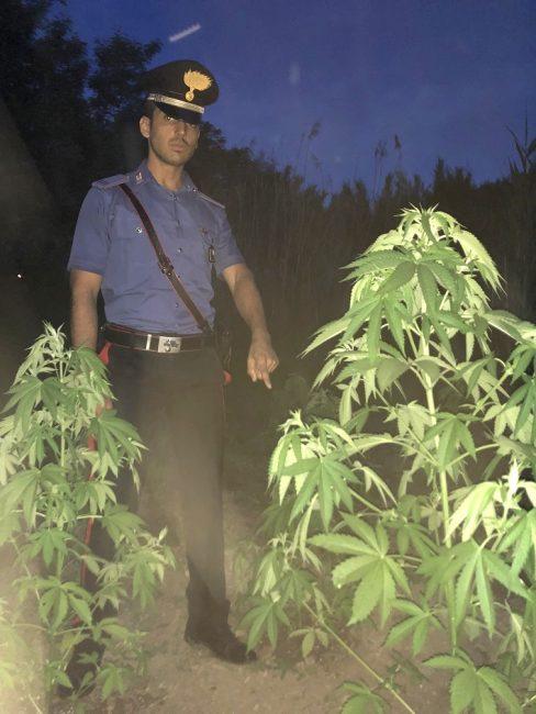 Piantagione di marijuana a Felonica: tre arresti.