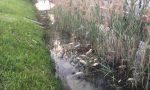 Pesci morti: allarme sul lago di Garda