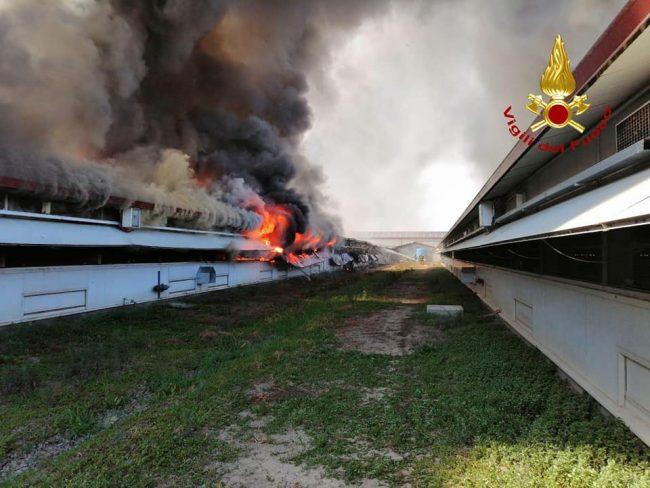 Terribile incendio in un allevamento di polli nel padovano FOTO