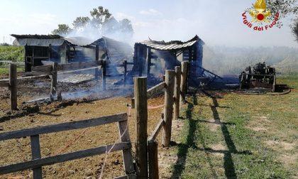 Incendio in un maneggio a Ronco all'Adige: salvi cinque cavalli FOTO e VIDEO