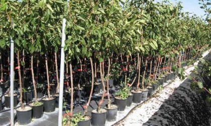 """""""Ridiamo il sorriso alla pianura padana"""", parte la consegna a Verona di 3.500 piante"""
