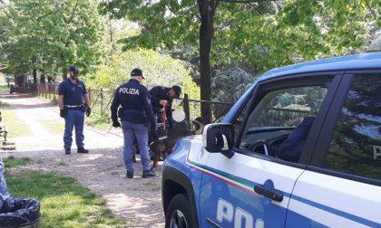 Cani antidroga in circonvallazione Oriani, sequestrati oltre 60 grammi di stupefacente