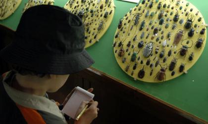Domeniche al Museo di Storia Naturale di Verona
