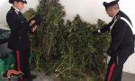 Giovani e droga, tripla operazione dei carabinieri in provincia di Verona