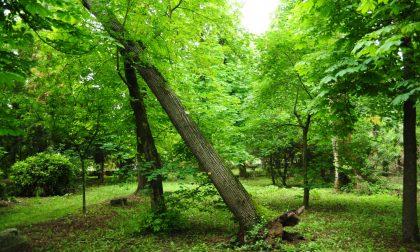 """Maltempo: alberi e rami """"killer"""" serve più specializzazione nella cura del verde"""