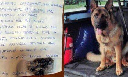 Gli spacciatori piangono Rocky, il cane antidroga della polizia di Thiene
