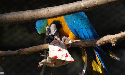 Parco Natura Viva, anche gli animali alle prese con i regali