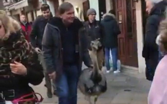 Due struzzi a passeggio tra le calli di Venezia VIDEO