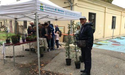 """""""Ridiamo il sorriso alla Pianura Padana"""", oltre 3mila piante nuove in città"""
