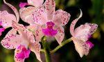Garden e i Floricoltori non apriranno i punti vendita per contribuire al contenimento del contagio