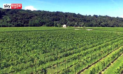 Gli imprenditori veneti del vino chiedono interventi immediati per salvare i posti di lavoro VIDEO