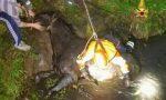 Cavallo cade nel fossato a Roncà, salvato dai Vigili del fuoco VIDEO