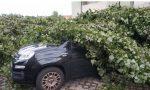 Un albero sfonda la macchina di un ignaro cittadino ma il Comune non paga…