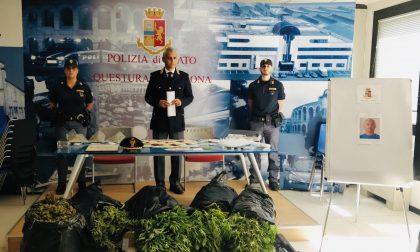 Scoperta una piantagione di marijuana tra Verona e Castel d'Azzano, arrestato ex agricoltore – FOTO