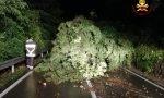 Maltempo: numerosi danni tra cavi dell'illuminazione strappati e alberi caduti sulle auto FOTO