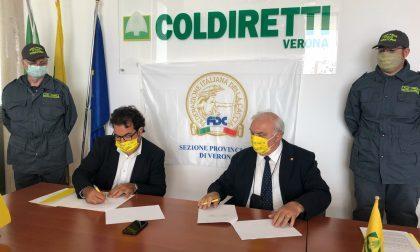 """Firmato l'accordo tra agricoltura e attività venatoria, Salvagno: """"Una relazione sostenibile con l'ambiente"""""""