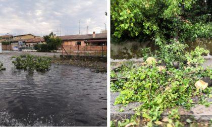 Maltempo a Verona: rami a terra, strade allagate e Transpolesana in tilt FOTO
