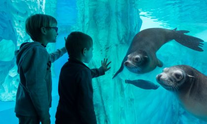 Gardaland Sea Life Aquarium riapre dal 13 agosto, 5mila creature marine vi aspettano VIDEO