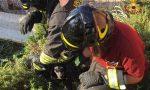 Cane cade in una vasca di liquame, salvato dai Vigili del Fuoco FOTO