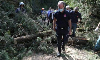 Sgombero piante e detriti: undici squadre e circa cinquanta volontari della Protezione civile al lavoro