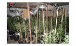 Maxi serra scoperta a Castelnuovo del Garda, dentro circa 400 piante di cannabis: due arresti – VIDEO