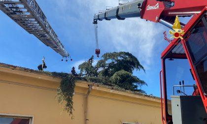 Forte vento spezza due alberi che cadono sulla caserma G. Duca, rimossi dai Vigili del Fuoco FOTO E VIDEO