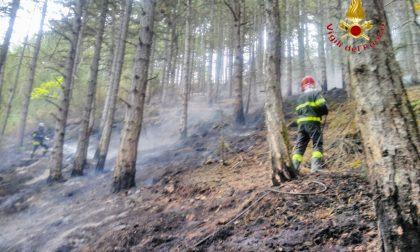 Missione anticendio boschivo a L'Aquila: Vigili del Fuoco all'opera per bonificare a mano le zone impervie FOTO