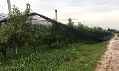 Coldiretti Verona: milioni di danni da maltempo nelle campagne, tecnici al lavoro per la stima