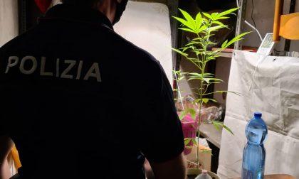 Scoperta una serra di marijuana in cantina: denunciato un 24enne