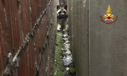 Sascia resta incastrato tra due muri: salvato dai Vigili del fuoco – FOTO