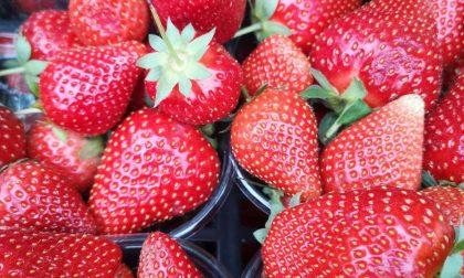 """Coldiretti Verona: """"Bene l'export dell'agroalimentare veronese nel primo semestre 2020"""""""