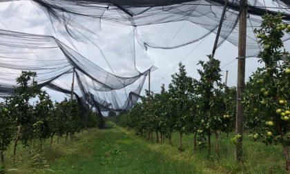 Danni da maltempo da centinaia di milioni con piante sradicate, uva rovinata e tetti smantellati