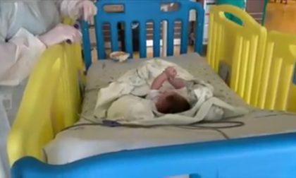 Dopo l'abbandono sul ciglio della strada, il piccolo Zeno è stato affidato a una famiglia