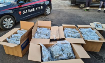 Maxi sequestro di droga: arrestati 3 uomini con un totale di 88 chili di marijuana VIDEO
