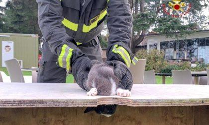 Gatto curioso rimane incastrato, salvato dai Vigili del Fuoco VIDEO