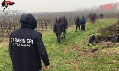 Regime di sfruttamento nella cooperativa agricola a Cologna Veneta: 3 misure cautelari VIDEO