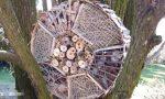"""""""Bee-Love"""", un riparo per le api realizzato dai ragazzi dell'ospedale Santa Giuliana"""