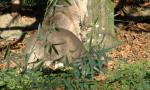 La famiglia Grey si allarga: è nato un piccolo canguro grigio orientale al Parco Natura Viva VIDEO