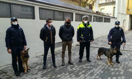 Axel è la nuova unità cinofila della Polizia locale di Verona