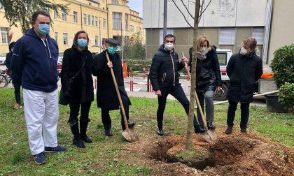 Un albero in ricordo delle vittime del Covid