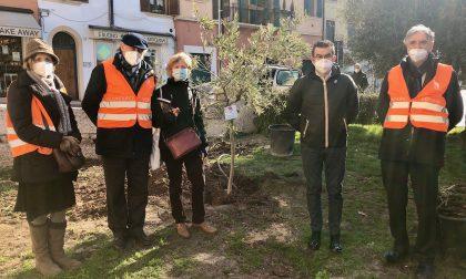 """Gli """"Angeli del Bello"""" donano due piante alla città"""