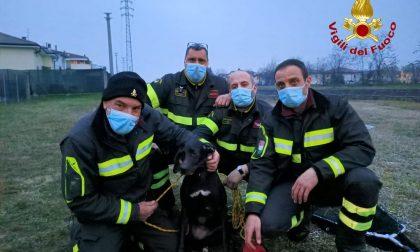 Cane cade in acqua nel canale Giuliari all'altezza di Borgo Roma, lo salvano i pompieri