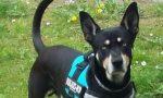 Blaky è un cane da soccorso speciale, con il suo fiuto riesce a trovare le esche avvelenate