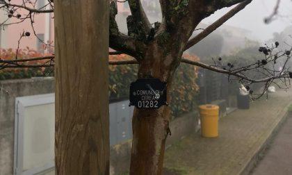 Cerea investe nella protezione e cura degli alberi, al via la mappatura del patrimonio arboreo