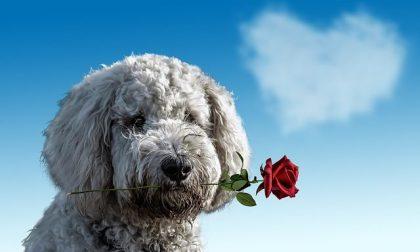 Auguri San Valentino 2021, le frasi più romantiche da inviare via Whatsapp
