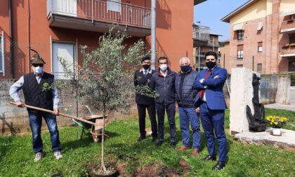 Alpini piantano due nuovi ulivi al monumento dedicato all'eroe veronese Marcolini
