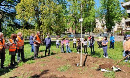 """""""Angeli del Bello"""" e gli alunni hanno piantato un nuovo noce al posto del cedro abbattuto dal nubifragio"""
